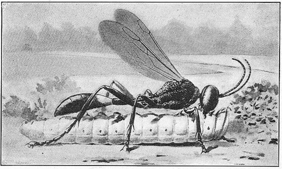 wasps2