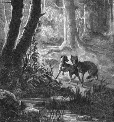 wolfanddog