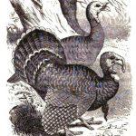 Hey Turkey!