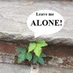 Leaves Of Three…