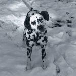 Sagan's Sense Of Snow.