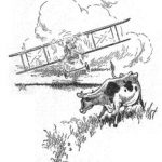 Flight Of The Kiwis.