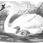 Swan Dive.